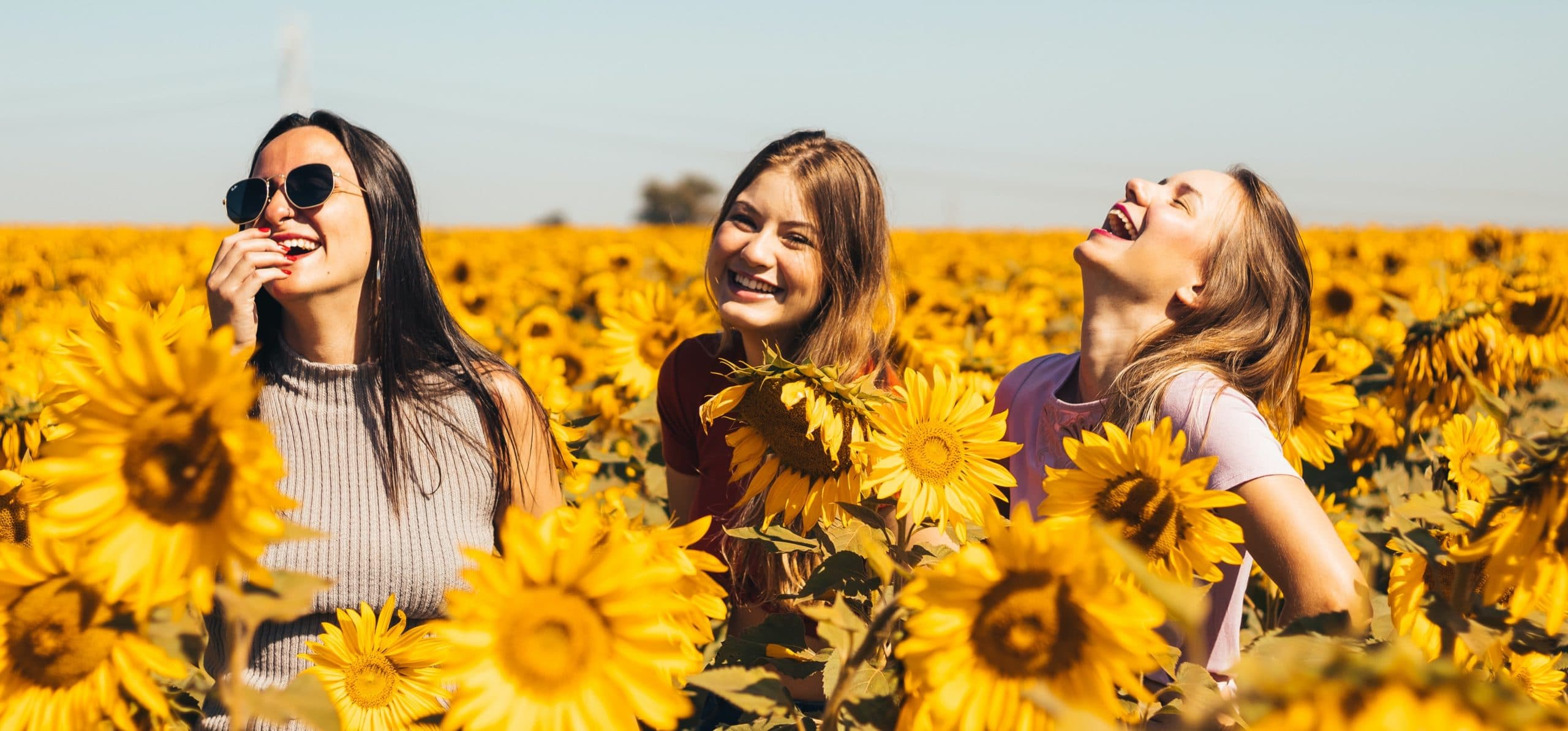 Three women laughing in a field of sunflowers